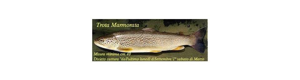 trota-marmorata371px-salmo-marmoratus.jpg